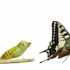 The Caterpillar And The Butterfly - International Story